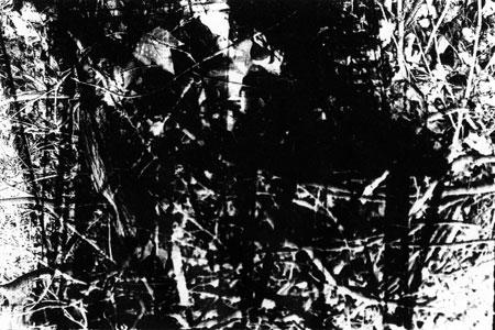Maschinenwald, 1997, Fotografie