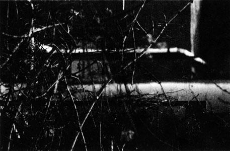 Rohrsträucher, 1997, Fotografie