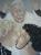 Päpstlicher Segen, 2010, Öl auf Nessel, 180 x 140 cm